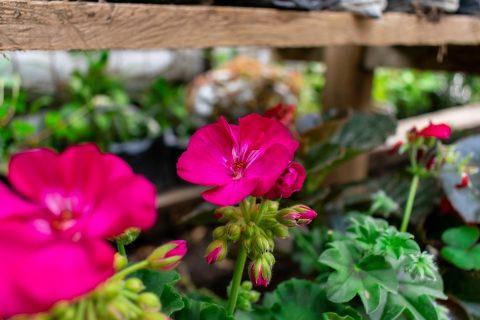 Dekorowanie ogrodu